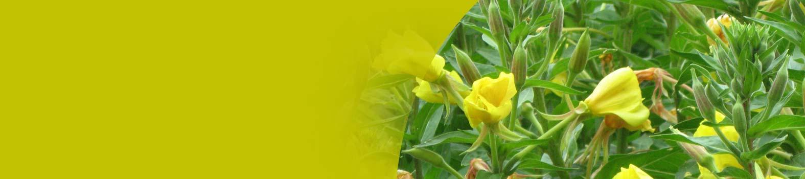 """""""... i loro frutti serviranno come cibo e le foglie come medicine""""<br/ >(Ezechiele 47;12)"""