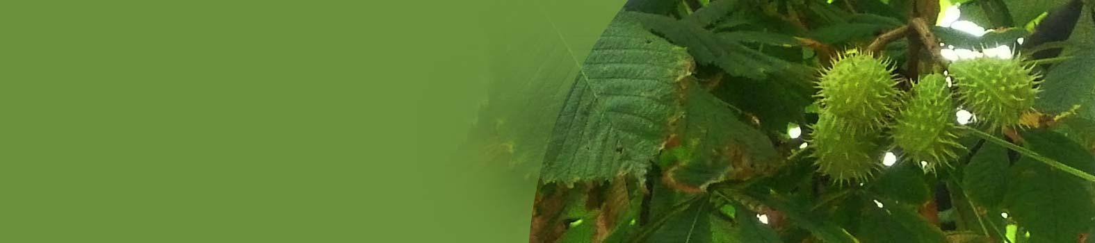 Le piante medicinali: base di estrazione di molti farmaci