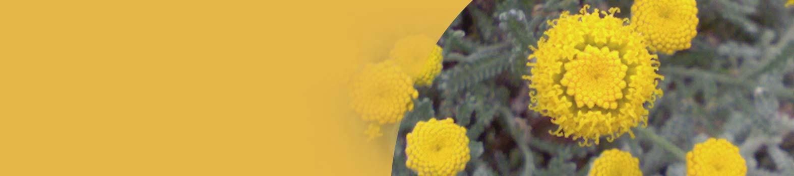 Le piante: fonte di campi fisici di informazione strutturati e armonici