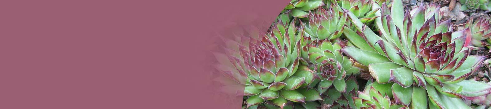 """"""" l'erbaccia è una pianta cui non sono state<br />ancora scoperte le virtù""""<br />Ralp Waldo Emerson"""